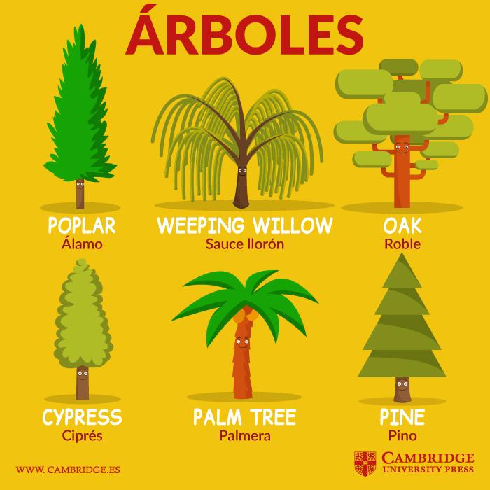 Tipos de rboles en ingl s blog cambridge for Las partes de un arbol en ingles